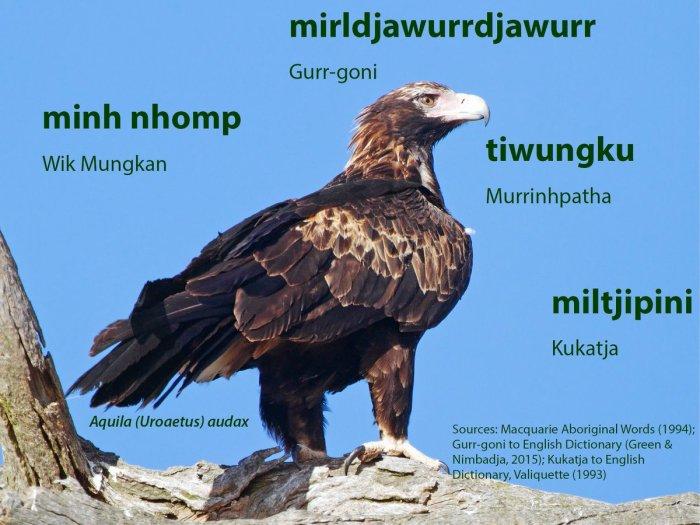 eagle aborginal